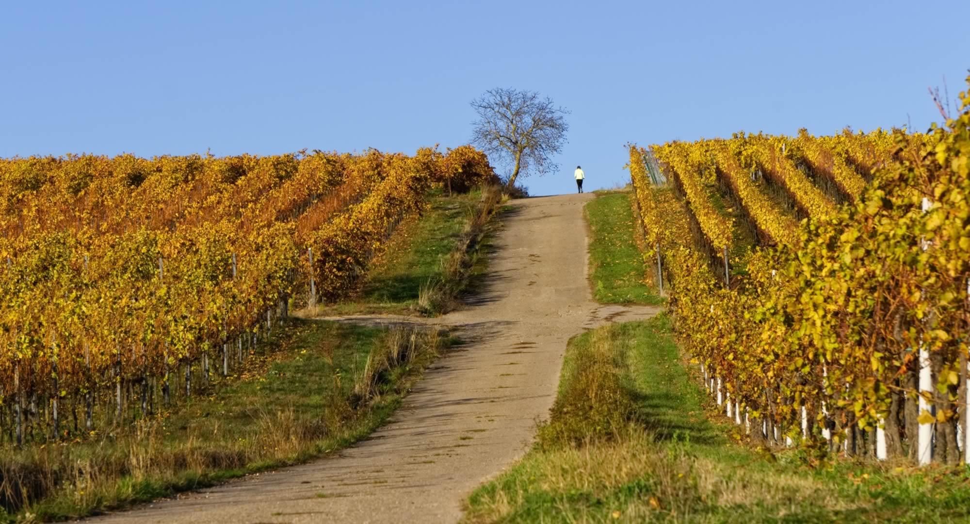 séminaire vignoble Bourgogne