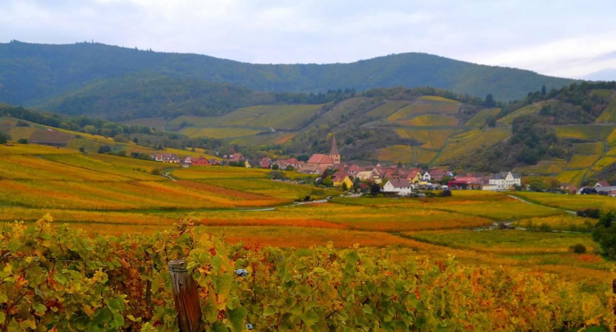 séminaire vignoble Alsace